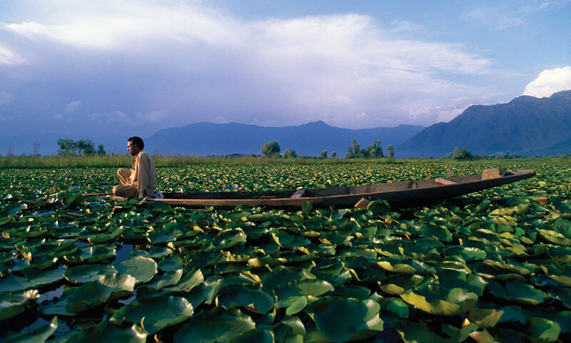 A man floats among the lily pads on a lake in Srinigar in the Kashmir region of India in 2000.