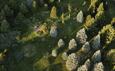 Aerial photo of the Longenecker Gardens