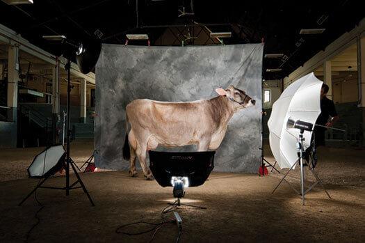 Milk Matters | On Wisconsin Magazine