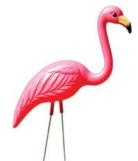 Flamingos_Bascomhill12_6097_ClippingPath