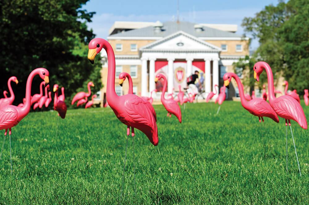 Flamingos_Bascomhill12_5833