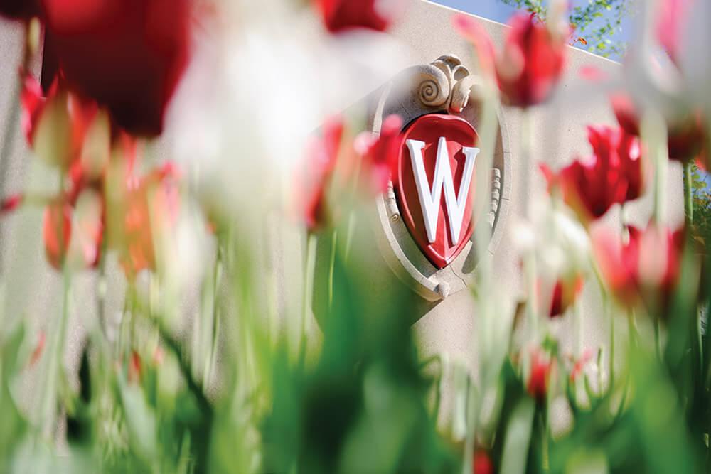 W_Crest_tulips13_1689