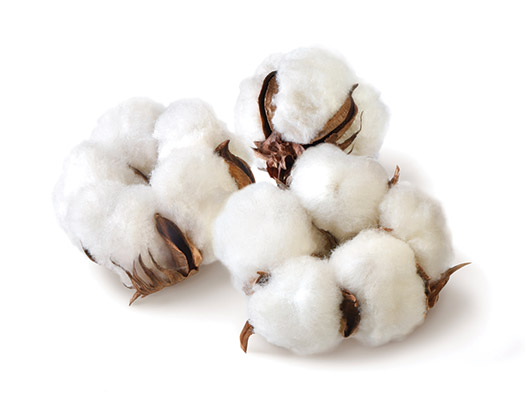 A genetically engineered variety of cotton called Bt cotton has been in commercial use since 1995. It produces its own insecticide (Bt toxin) to reduce the need for spraying.