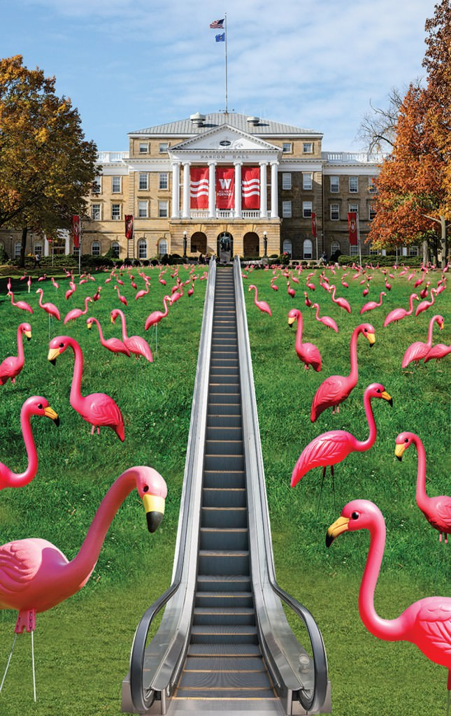 Photo illustration of Bascom hill dotted with pink flamingoes and elevator going up the center towards Bascom Hall.