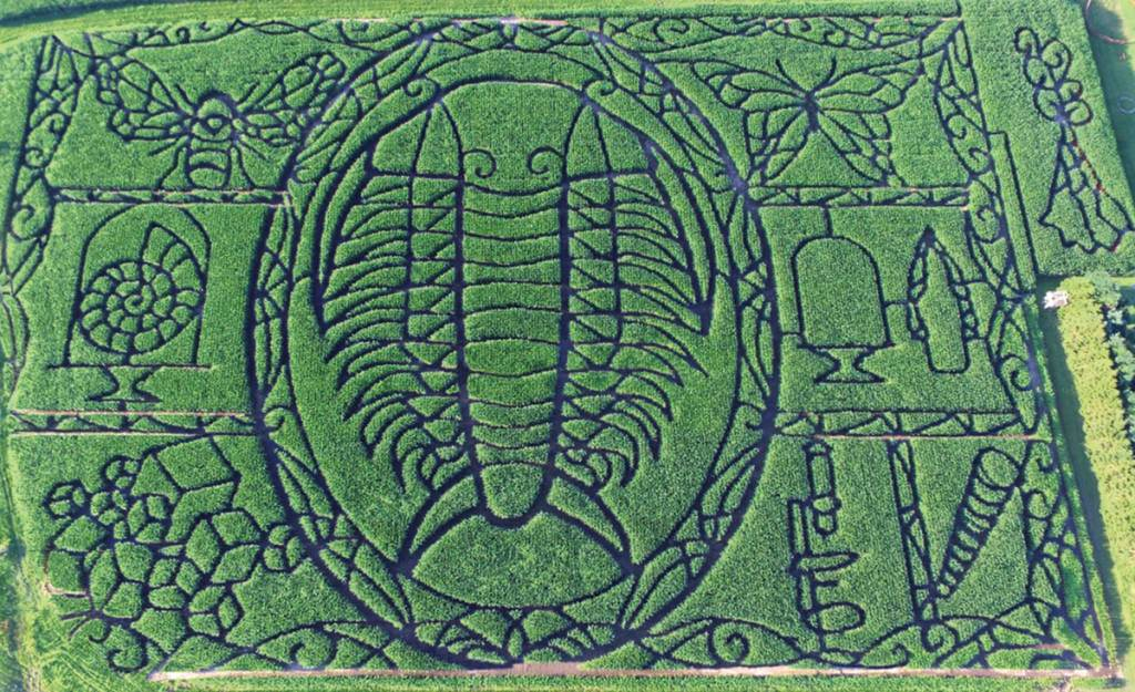 Aerial shot of intricate corn maze.