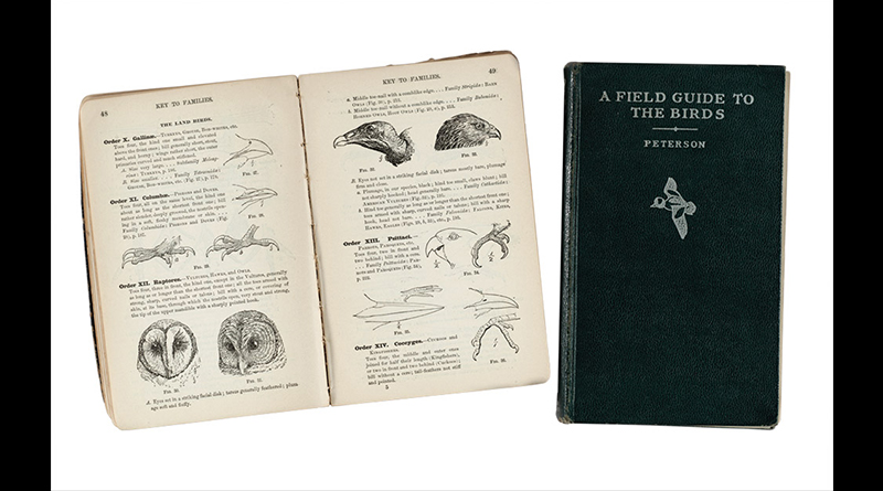 Two old notebooks, one closed and one open to page showing drawings of birds with descriptions.