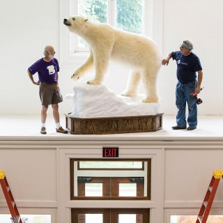 polar_bear_display15_8306_(1)