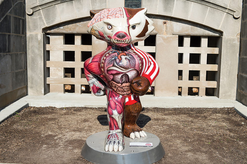 Bucky statue painted to show exposed anatomy including muscles, and organs