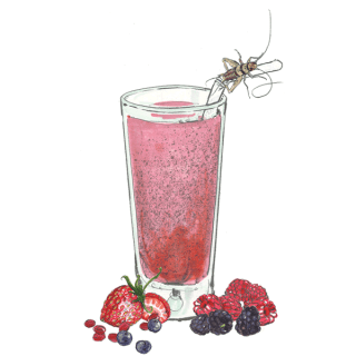 Illustration of insect perched on edge of smoothie