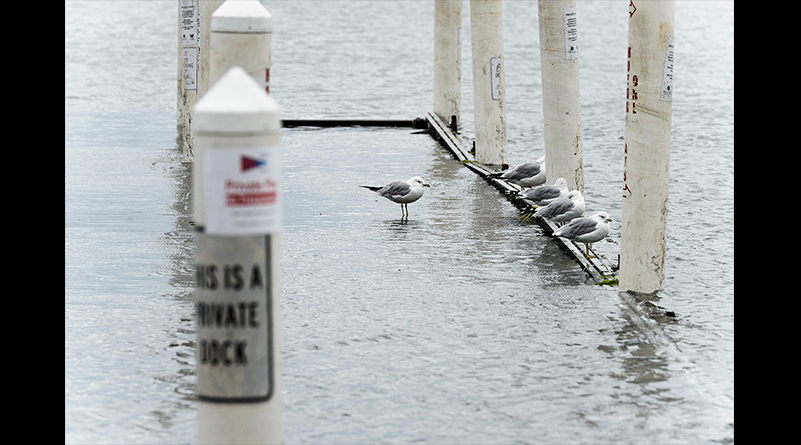 Seagulls perch on a flooded pier for Hoofers' sailboats on August 24 as rising water from Lake Mendota floods the Memorial Union Terrace shoreline.