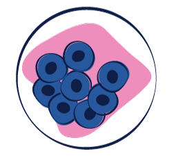 Illustration of cells in culture dish