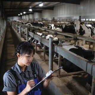 Student fills writes on clipboard with rows of dairy cows in the background
