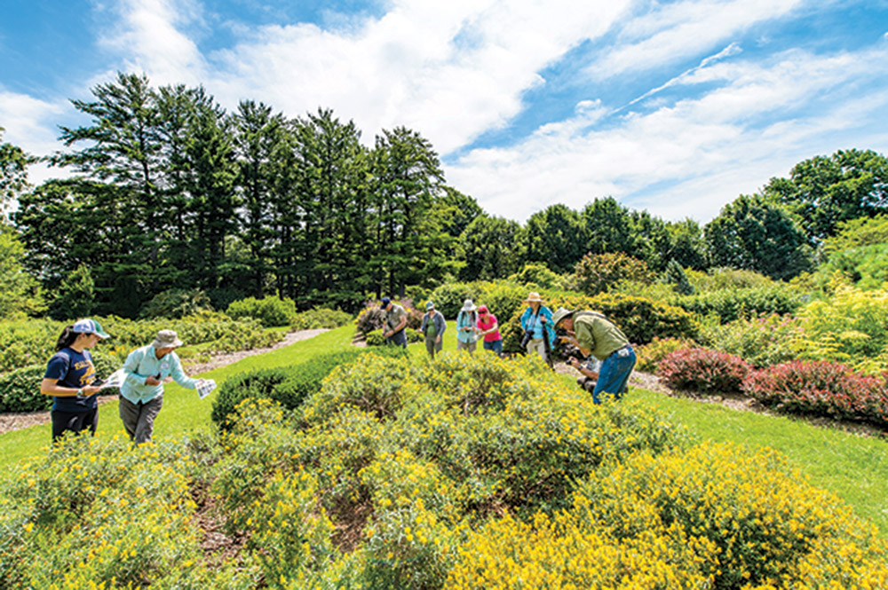 A group of people survey flowers for bumble bees on a sunny spring day in the UW Arboretum