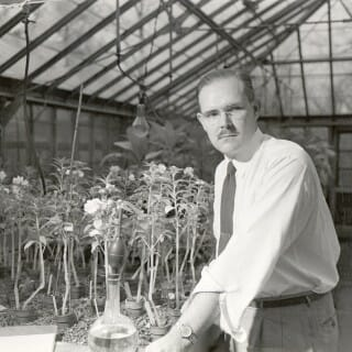 John Curtis, shown in his plant lab in 1951