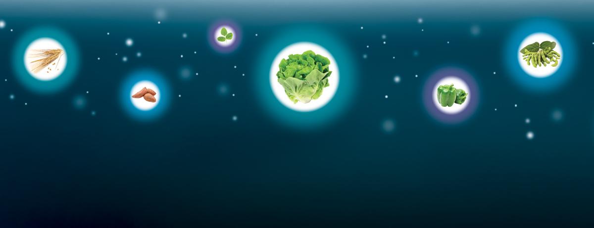 Illustration of vegetables floating in the sky