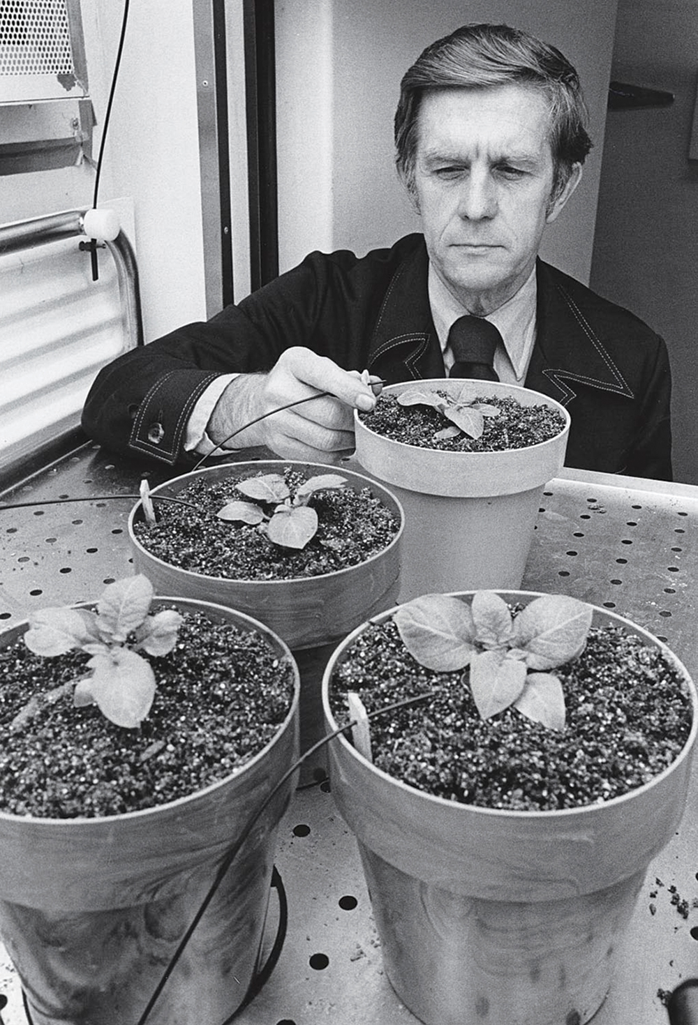 Ted Tibbitts monitoring potted plants