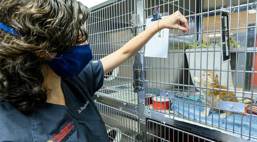 Veterinary intern plays with kitten through bars of crate