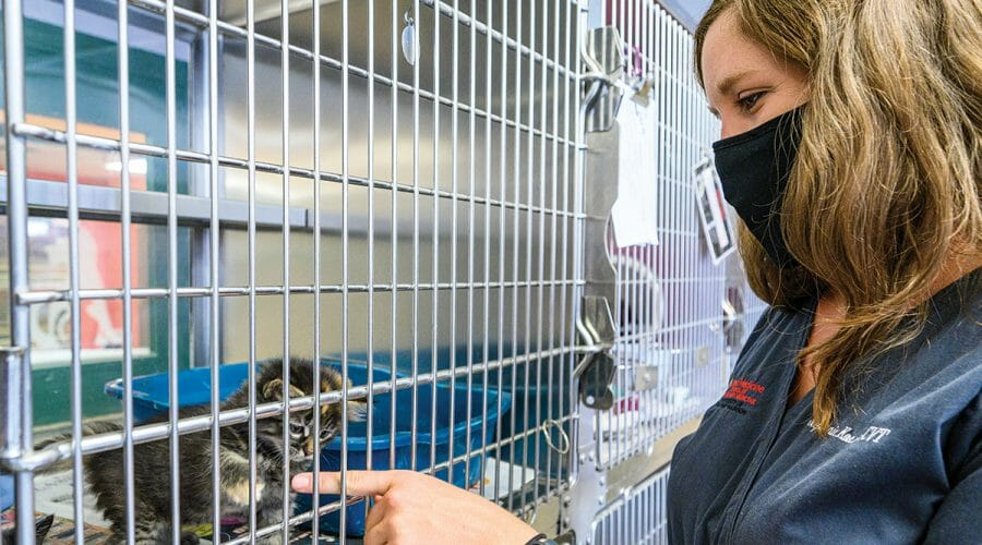 Veterinary intern interacts with kitten in crate