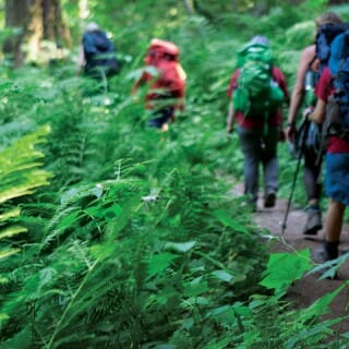 Group of campers hiking through green forest