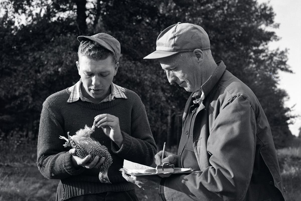 Joseph Hickey and Hallock Hosford examine a bird